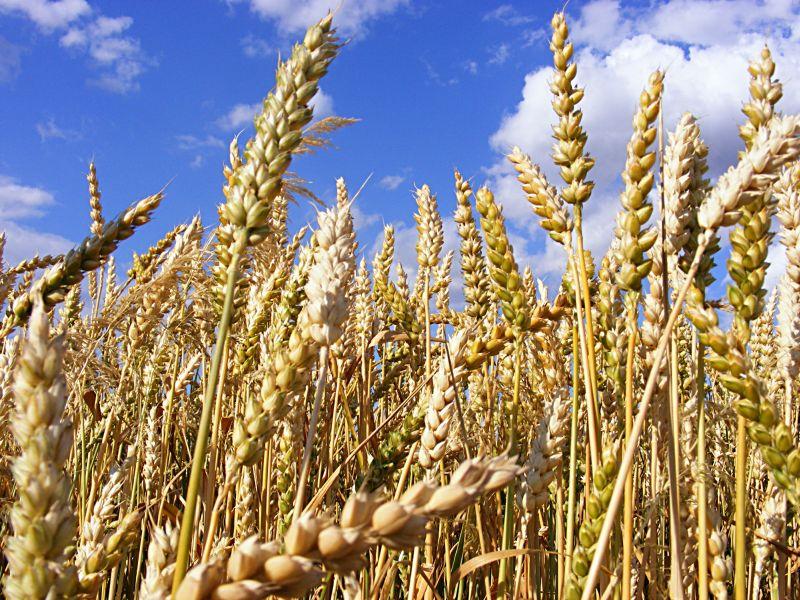 Welche Nährstoffe stecken im Getreide? | Die Frische Küche