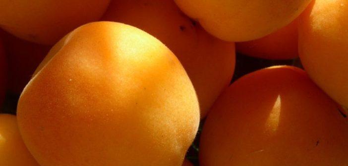 Die gesunden Inhaltstoffe der Marille