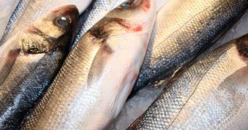 Fisch Saison